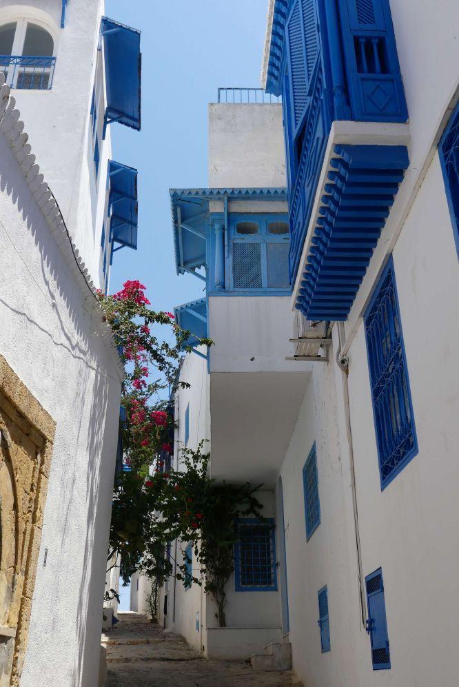 Tunis 13