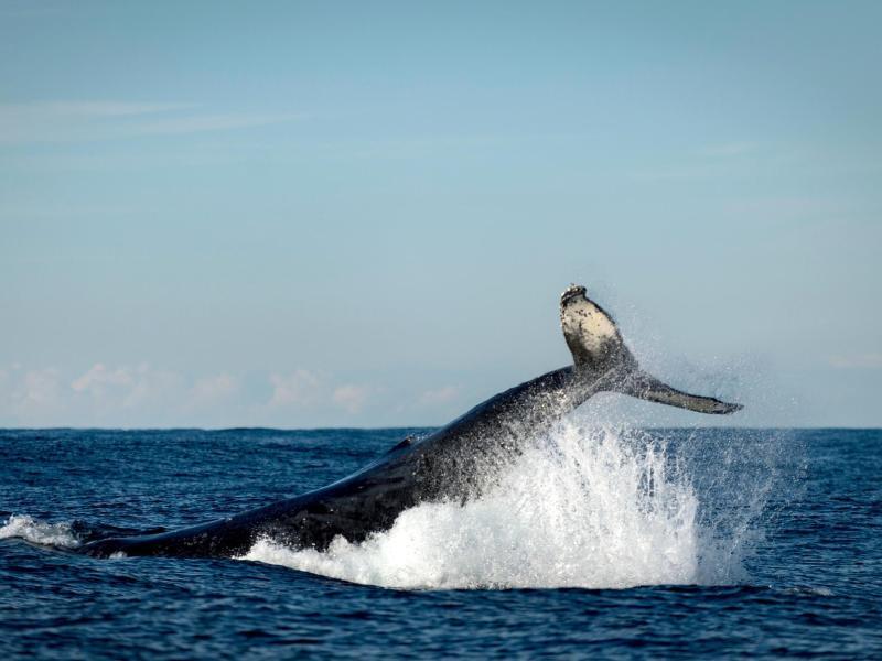 Studie: Lärmverschmutzung der Meere betrifft mehr Tiere als angenommen