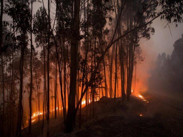 Einer der schlimmsten Waldbrände in Portugals Geschichte forderte viele Menschenleben. Ein Blitzeinschlag hatte den Brand laut Polizei in der Region Pedrógão Grande ausgelöst. Foto: Peter Kneffel/dpa