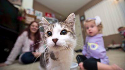 Freunde mit dem gleichen Schicksal: Arm-amputierte Tochter findet ein ganz besonderes Kätzchen