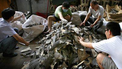 Galápagos-Inseln: Über 6000 Haie an Bord von chinesischem Schiff entdeckt – auch vom Aussterben bedrohte Arten