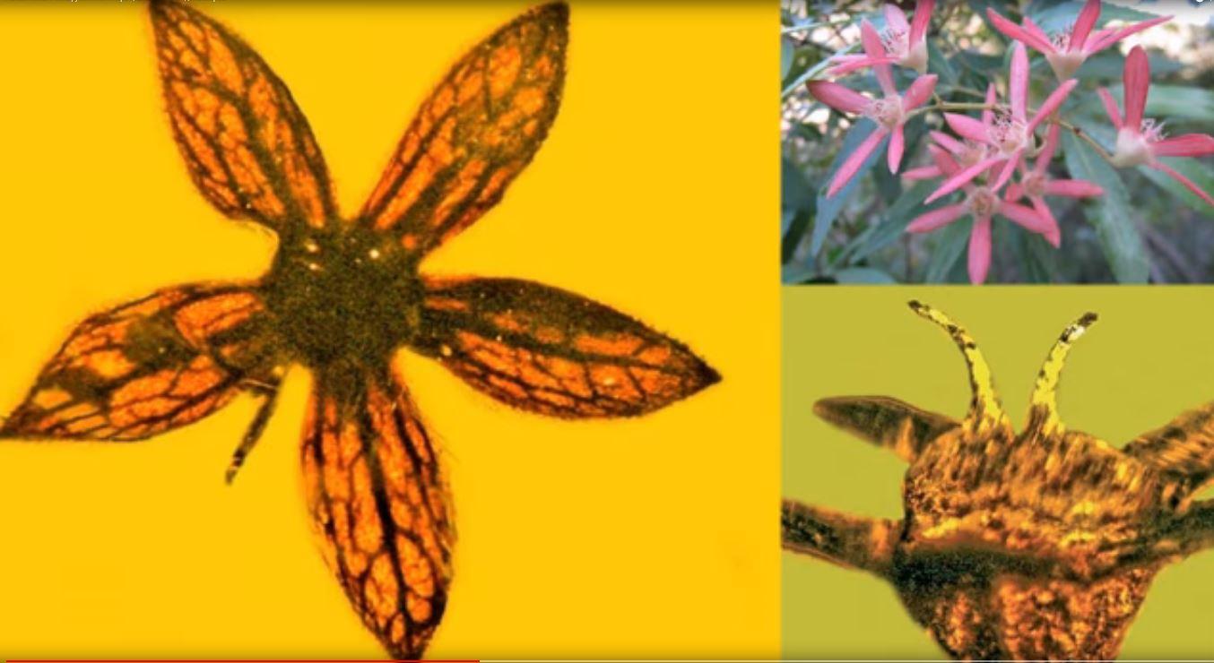 Kreidezeit Pflanzen