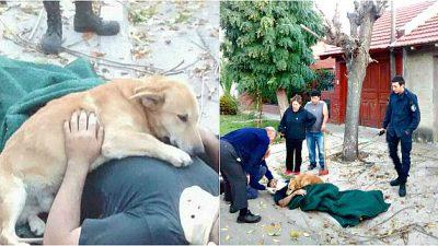 Tierischer Ersthelfer: Besorgter Hund weigerte sich bewusstloses Herrchen zu verlassen