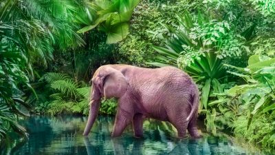 Rosa Elefantenbaby weckt besonderes Interesse