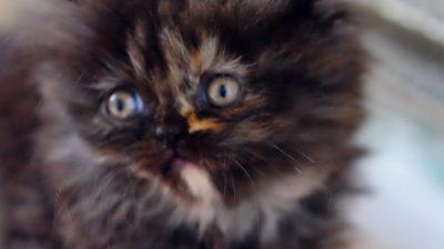 Ein Kätzchen im Meer – Familie rettet entkräftete Baby Katze während Bootsfahrt