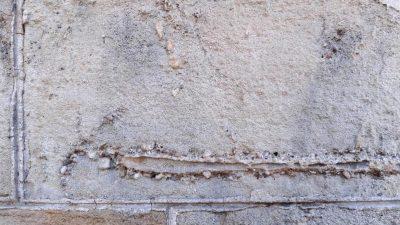 Neue Fossilienart an Gebäuden in Barcelona entdeckt