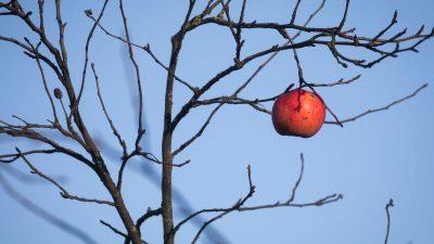 Bauern ernteten im vergangenen Jahr 42 Prozent weniger Baumobst