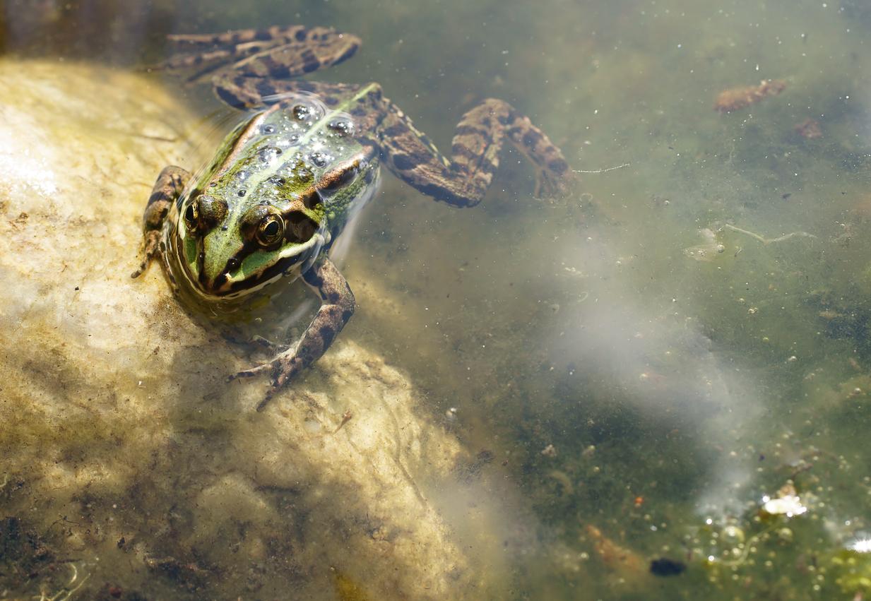 Ein großer Teich war zugefroren – Von Johann Wolfgang von Goethe
