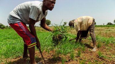 Nigerias blutigster Kampf wird auf den Feldern ausgetragen