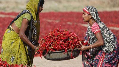 """""""Gender Mainstreaming"""" und die Rolle der UNO (Teil 2)"""