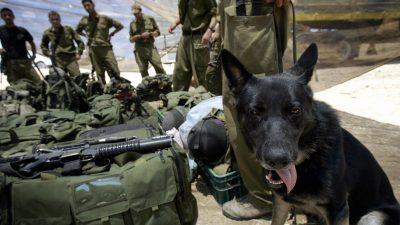 Tierische Soldaten: Kamerahunde statt Drohnen für die Bundeswehr