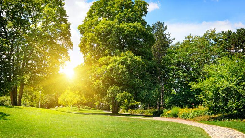 Wetter zu Pfingsten: Am Montag bis zu 26 Grad und Sonnenschein