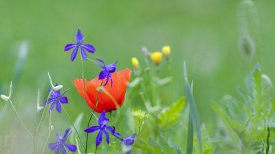 Die blaue Blume – Von Joseph Freiherr von Eichendorff