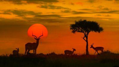 Der Reichtum Afrikas, die verfehlte Entwicklungshilfe und der Reichtum der Machteliten