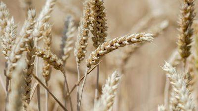 Bauer auf Hainan erzählt vom Landraub der KP – 60 Jahre Felder bewirtschaftet, nun das Aus?