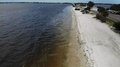 """100 Tonnen tote Tiere: """"Rote Flut"""" lässt unzählige Meeresbewohner an Floridas Küste verenden"""
