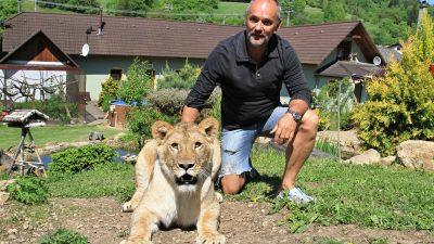 Der Löwe als Haustier auf der Straße: In Tschechien leben über 250 Großkatzen bei privaten Haltern und Züchter