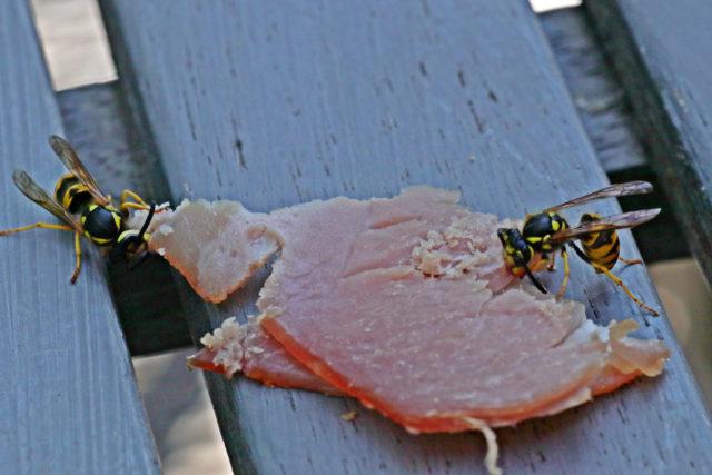 Sterben Wespen Beim Stechen