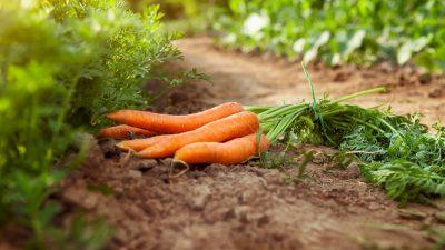 Rewe verkauft nun auch Obst und Gemüse mit Schönheitsfehlern