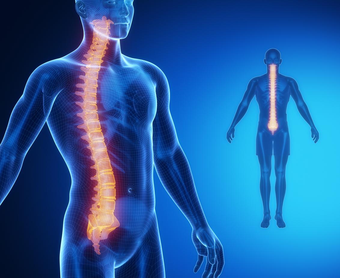 Spine Bone Anatomy X Ray Scan