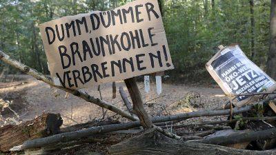 Öko-Suchmaschine Ecosia will Hambacher Forst kaufen