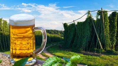 Radikale Umwelthilfe klagt Teile Deutschlands in den Stillstand – Krombacher Brauerei stoppt Spendengelder
