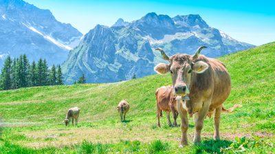 Schweizer Verfassung als oberste Rechtsnorm? Selbstbestimmungs-Initiative will vollständige Souveränität wiederherstellen