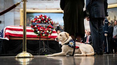 Labrador Sully erweist verstorbenem US-Präsidenten Bush die letzte Ehre