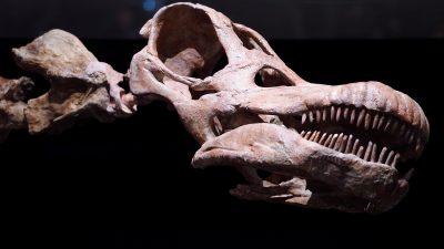 Fossil des ältesten Sauropodomorpha in Brasilien identifiziert