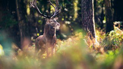 Forscher finden Überreste eines prähistorischen Hirsches in Argentinien
