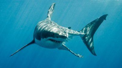 Frau auf Antillen von Hai getötet