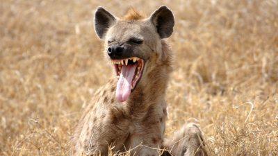 """""""Linke Hyänen"""": Intoleranz und Hass auf Andersdenkende als politisches Leitmotiv"""