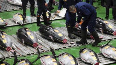 Sushi: Thunfisch für 2,7 Millionen Euro in Japan versteigert
