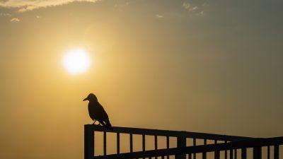 Krähen bei Sonnenaufgang – Von Christian Morgenstern