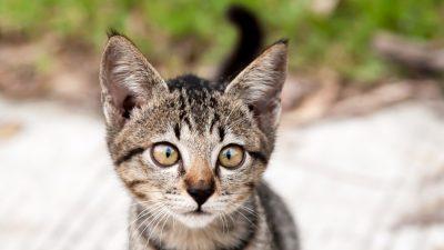 Schielende Katze erobert das Internet