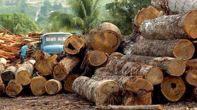 Abholzung des Amazonas-Regenwaldes geht weiter