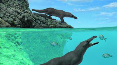 Peru: Prähistorischer, vierbeiniger Wal mit otterartigen Merkmalen gefunden