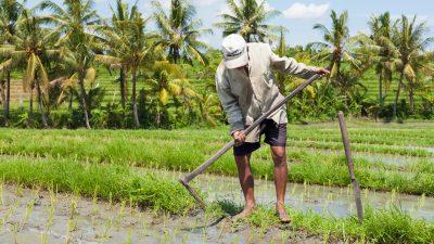 """Bio made in China: Betrug und nachlässige Kontrollen im Öko-Landbau – """"schockierend"""""""