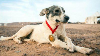 """""""Lauf, Cactus!"""" – Streunender Hund begleitet Sahara-Ultramarathon"""