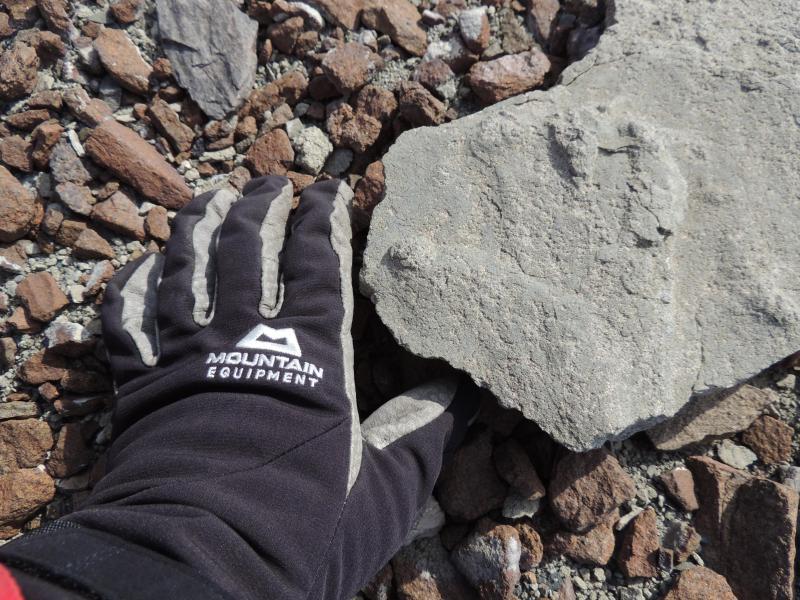 Antarktis-Expedition: 200 Millionen Jahre alter Saurier-Fußabdruck entdeckt