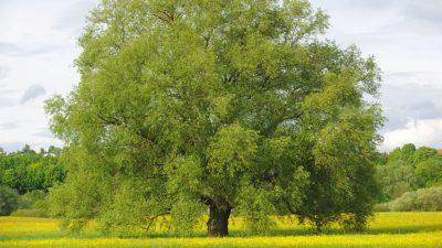 Bäume – Von Francisca Stoecklin
