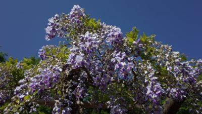 Erste Blüten, erster Mai – Von Otto Julius Bierbaum