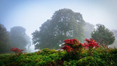 Klassik des Tages: Irische Rhapsodie