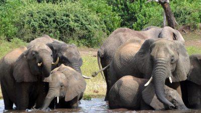 """Elefanten besuchten trauernde Witwe – 30 Jahre zuvor rettete der """"Elefanten-Flüsterer"""" die Herde"""