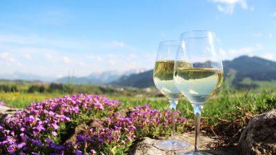 Sieben Million Liter Wein in Rheinland-Pfalz wegen mutmaßlichen Betrugs gesperrt