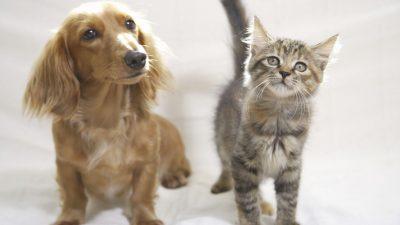 Hund und Katze – Von Wilhelm Busch