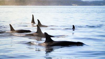 Gesundheit: Was haben Wale mit unseren Nährstoffen zu tun?