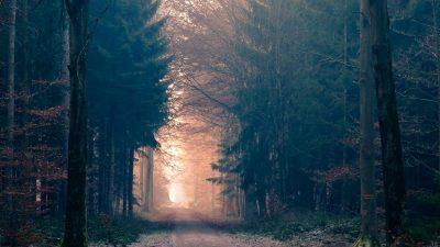 Nachts im Wald – Von Christian Morgenstern