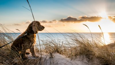 Streunende Hunde bewachten stundenlang verlassenes Baby
