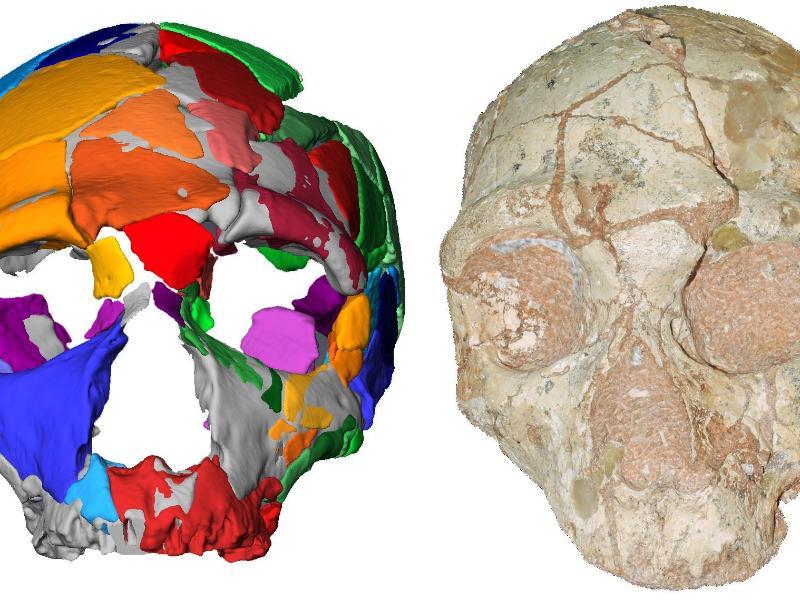 Geschichte des Homo sapiens erscheint immer älter und komplexer